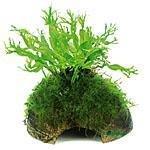 Dennerle Pflanzen auf Deco