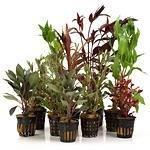 Hintergrundpflanzen
