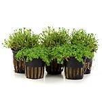 Vordergrundpflanzen
