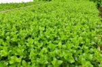 Emerse oder submerse Aquarienpflanzen kaufen?