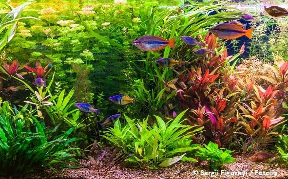 Schnellwachsende Aquarienpflanzen