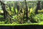 Das perfekte Aquarium für Garnelen einrichten