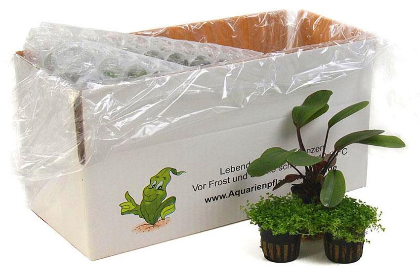 Versandkarton für Aquarienpflanzen