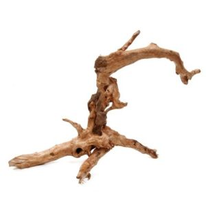 Garnelenaquarium einrichten - Wurzeln