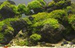 Moos im Aquarium befestigen: Anleitung, Tipps und Tricks
