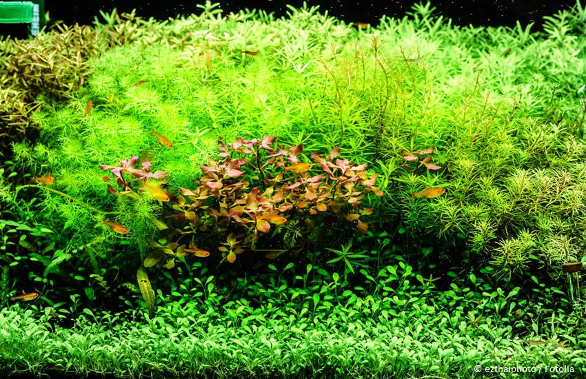 Optische Tiefe im Aquarium schaffen - Beckenlayout gestalten