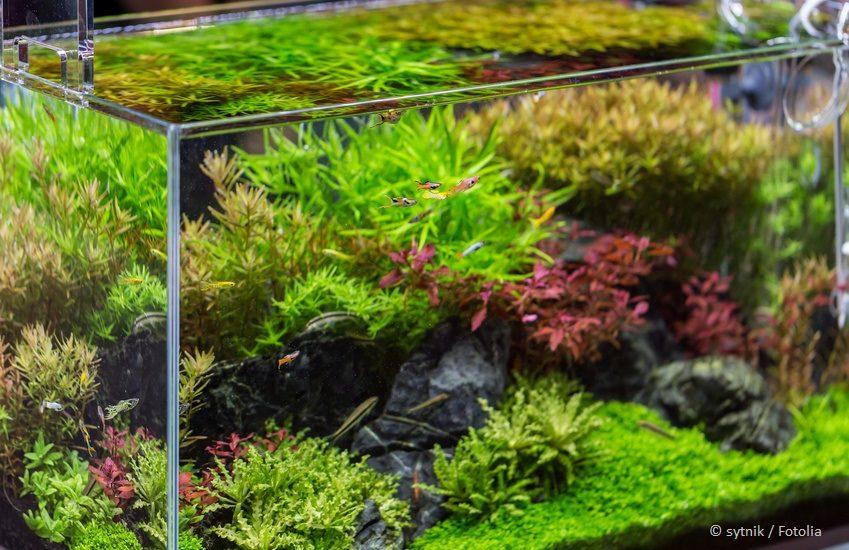 Rasen im Aquarium