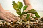 Aquarium: Pflanzen einsetzen und richtig vorbereiten