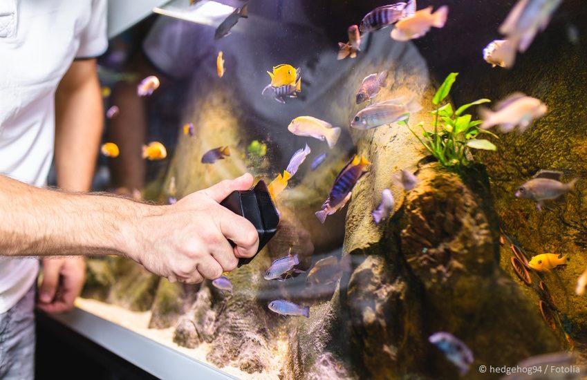 Wasserwechsel Aquarium - Vorbereitung