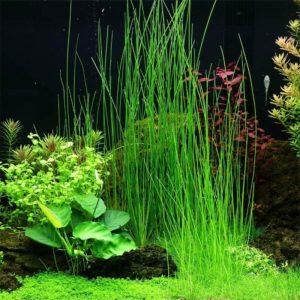 Pflanzengruppe im Aquarium für Anfänger