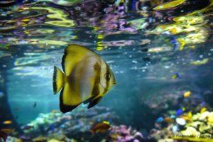 Exotisches Aquarium mit Fisch