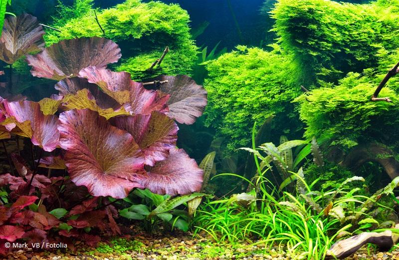 Aquarium für Anfänger