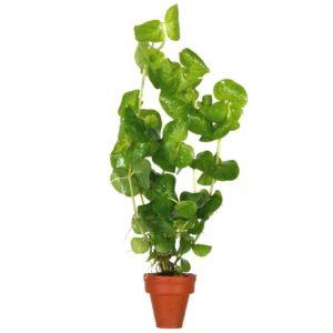 Wasserpflanzen Onlinehandel Händler