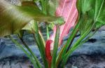 Aquarienpflanzen aus dem Onlinehandel: Tipps & Wissenswertes