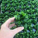 Aquarium-Rückwand bepflanzen – Tipps & Tricks