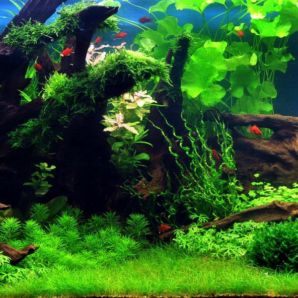 set tropischer teich mit ppiger vegetation f r aquarium 300 400 li. Black Bedroom Furniture Sets. Home Design Ideas