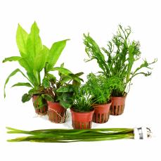 Aquarium Für Einsteiger : pflanzenset f r ein 54 liter einsteigeraquarium layout nr 1 von tropi ~ Frokenaadalensverden.com Haus und Dekorationen