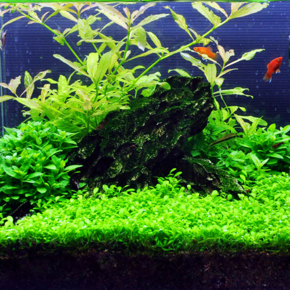 1-2-Grow Set von Tropica für 30 Liter Nano-Aquarium Layout 09