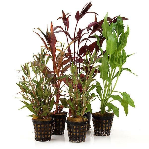 Welchen Dünger Für Aquarienpflanzen : 5 schnellwachsende aquarienpflanzen f r den hintergrund ~ Michelbontemps.com Haus und Dekorationen
