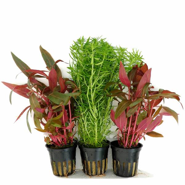 Kleines pflanzenset aus hochwertigen topfpflanzen von tropica for Kleine mucken in topfpflanzen