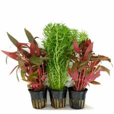 Aquarienpflanzensets basissets f r viele aquariengr en for Besondere topfpflanzen