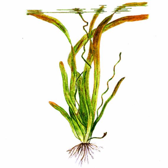 Wasserpflanzen im bund - Bilder von gartenteichen ...