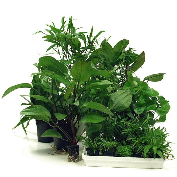 Was sind mutterpflanzen