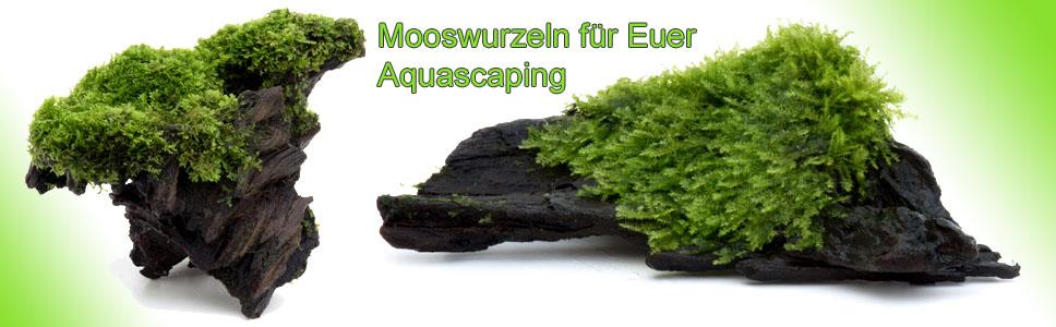 Mooswurzeln f�rs Aquascaping
