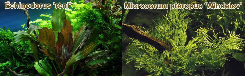 Zwei typische Mittelgrundpflanzen